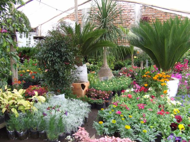 Jardines for Como decorar un jardin con plantas